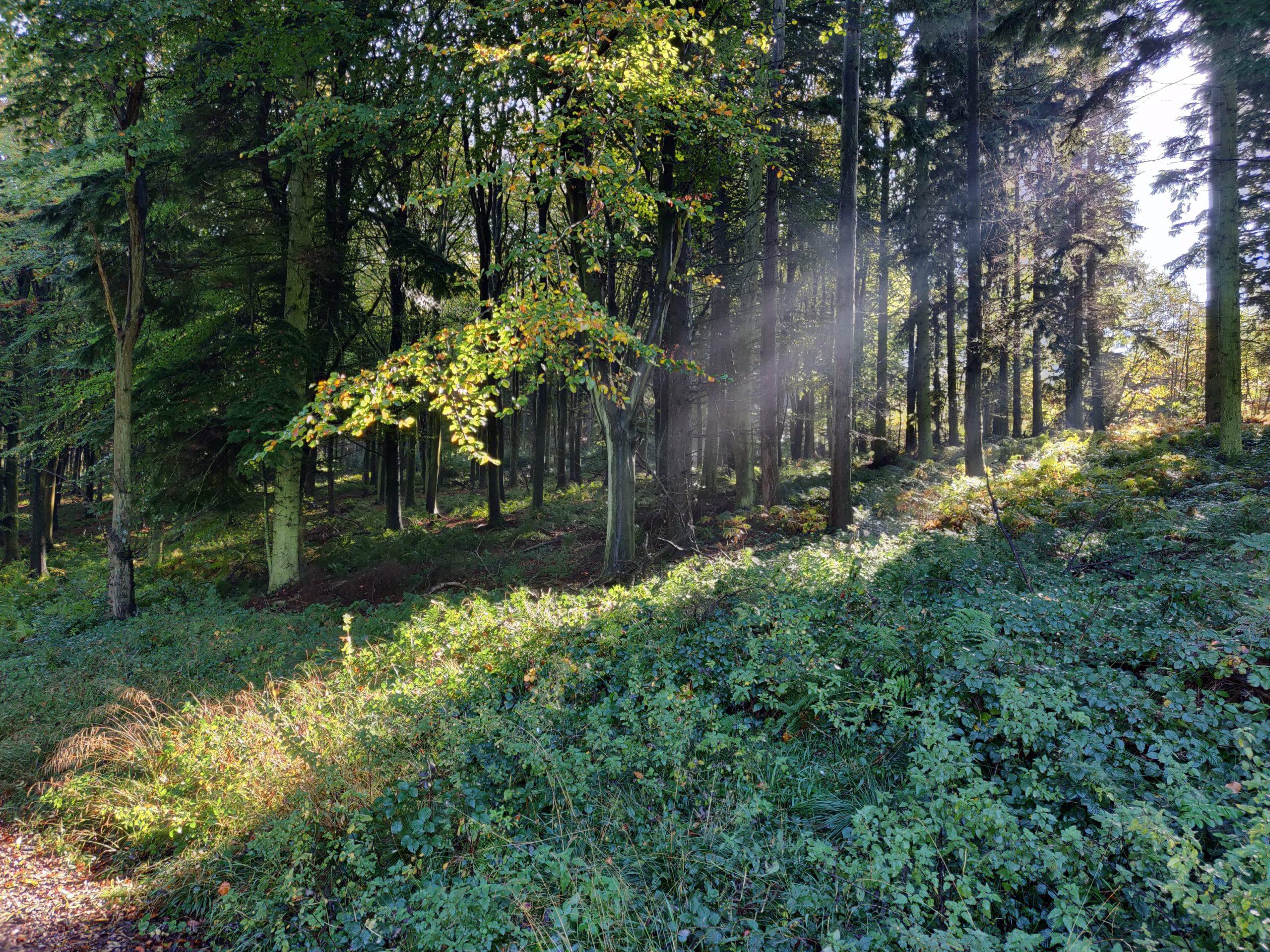 Woodland in Kent Garden of England